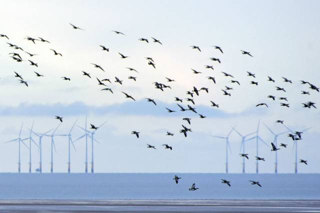 Donald Trump, Windmills and the Truth About Bird Death